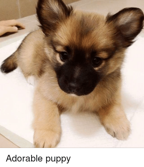 Adorable Puppy Meme On Meme