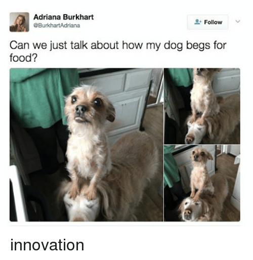 Food, Relatable, and How: Adriana Burkhart  Follow  @BurkhartAdriana  Can we just talk about how my dog begs for  food? innovation