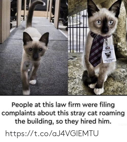 Memes, 🤖, and Cat: ADVA  People at this law firm were filing  complaints about this stray cat roaming  the building, so they hired him. https://t.co/aJ4VGlEMTU