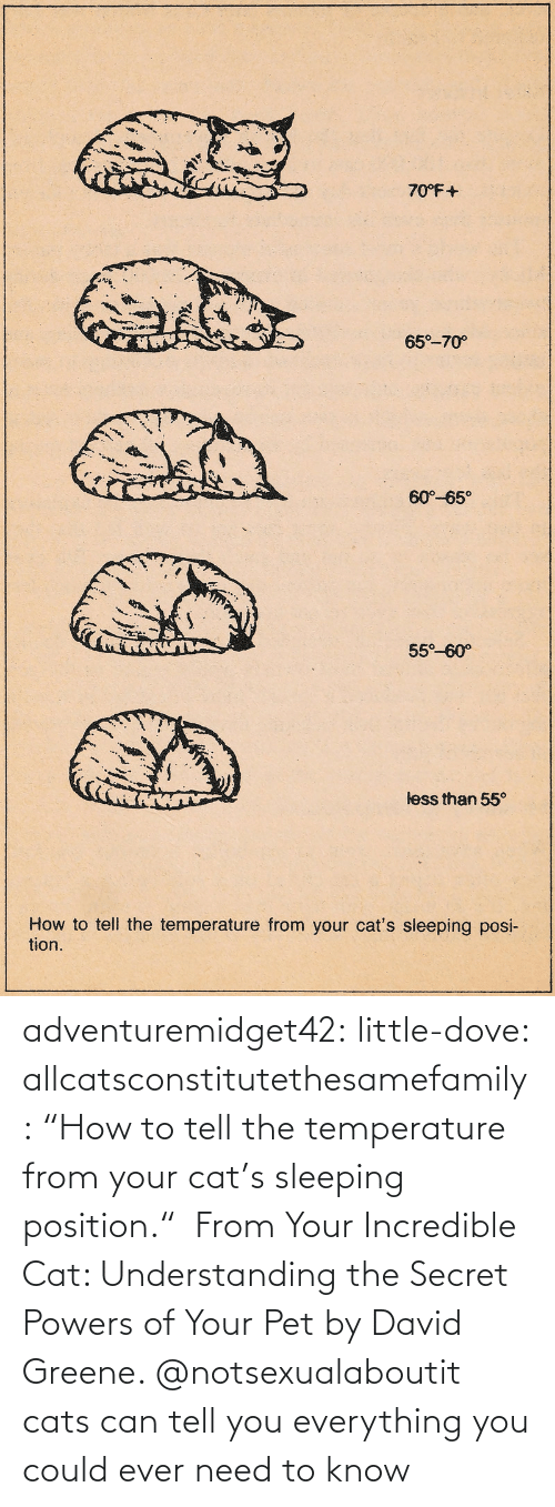 """Amazon, Cats, and Dove: adventuremidget42:  little-dove:  allcatsconstitutethesamefamily: """"How to tell the temperature from your cat's sleeping position."""" From Your Incredible Cat: Understanding the Secret Powers of Your Pet by David Greene.    @notsexualaboutit   cats can tell you everything you could ever need to know"""