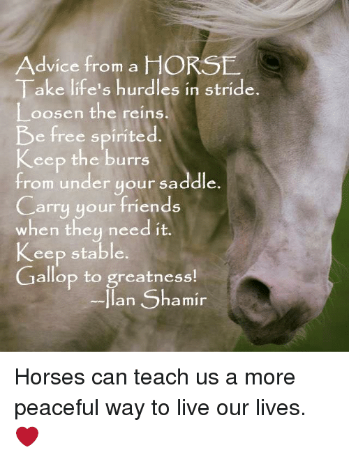 Advice, Horses, and Memes: Advice from a HORSE  Take life's hurdles in stride.  Loosen the reins  e free spirited  Keep the burns  from under your saddle  Carry your friends  when they need it.  Keep stable  Gallop to greatness  an  Shamir Horses can teach us a more peaceful way to live our lives. ❤️