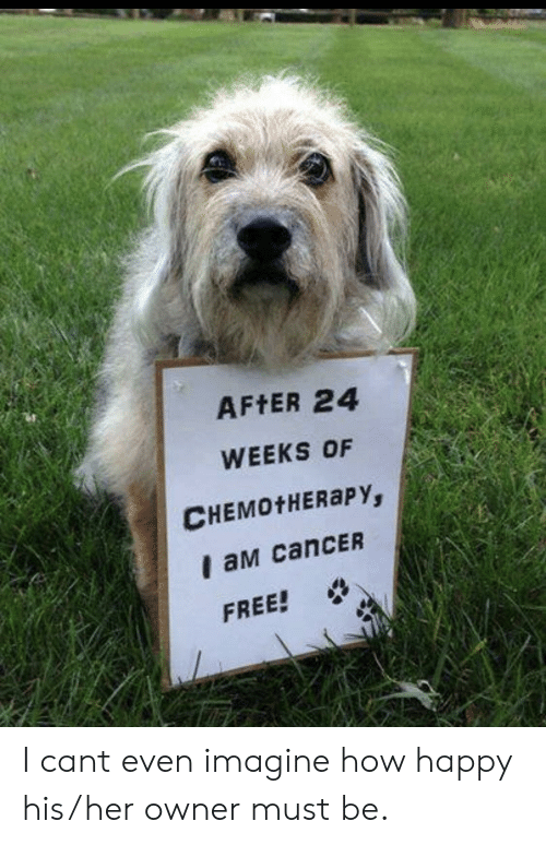 Cancer, Free, and Happy: AFtER 24  WEEKS OF  CHEMOtHERaPY,  I aM canCER  FREE! I cant even imagine how happy his/her owner must be.