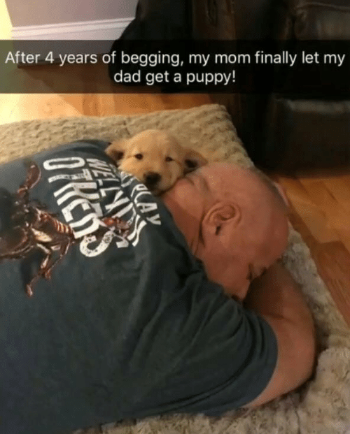 Dad, Puppy, and Mom: After 4 years of begging, my mom finally let my  dad get a puppy!