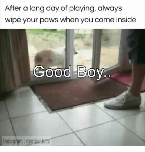 Indonesian (Language), When You, and Good Boy: After a long day of playing, always  wipe your paws when you come inside  Good Boy  Instagram gambarditou