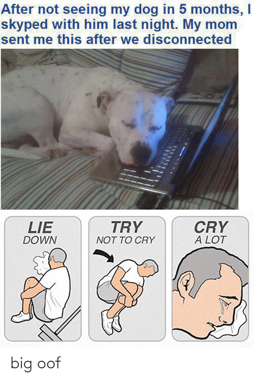 Dank Memes, Mom, and Dog: After not seeing my dog in 5 months, I  skyped with him last night. My mom  sent me this after we disconnected  CRY  A LOT  TRY  LIE  DOWN  NOT TO CRY big oof