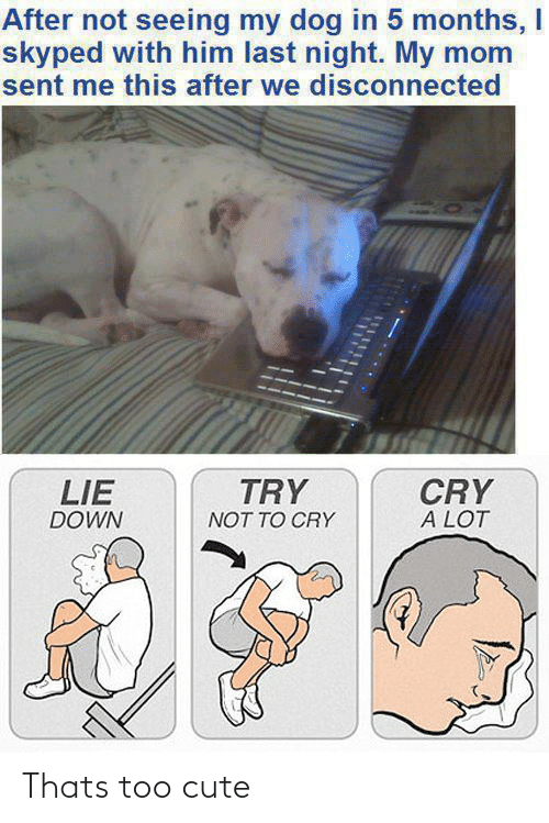 Cute, Mom, and Dog: After not seeing my dog in 5 months, I  skyped with him last night. My mom  sent me this after we disconnected  TRY  CRY  A LOT  LIE  DOWN  NOT TO CRY Thats too cute