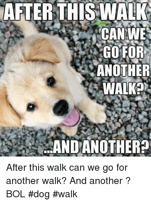 Memes, 🤖, and Another: AFTER  THIS WALK  CAN WE  GO'FOR  ANOTHER  WALK?  20  AND ANOTHER? After this walk can we go for another walk? And another ?  BOL  #dog #walk