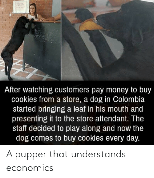 Cookies, Money, and Colombia: After watching customers pay money to buy  cookies from a store, a dog in Colombia  started bringing a leaf in his mouth and  presenting it to the store attendant. The  staff decided to play along and now the  dog comes to buy cookies every day. A pupper that understands economics
