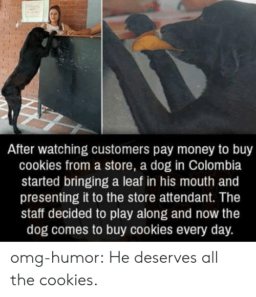 Cookies, Money, and Omg: After watching customers pay money to buy  cookies from a store, a dog in Colombia  started bringing a leaf in his mouth and  presenting it to the store attendant. The  staff decided to play along and now the  dog comes to buy cookies every day. omg-humor:  He deserves all the cookies.