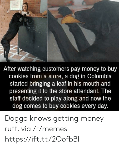 Cookies, Memes, and Money: After watching customers pay money to buy  cookies from a store, a dog in Colombia  started bringing a leaf in his mouth and  presenting it to the store attendant. The  staff decided to play along and now the  dog comes to buy cookies every day. Doggo knows getting money ruff. via /r/memes https://ift.tt/2OofbBl