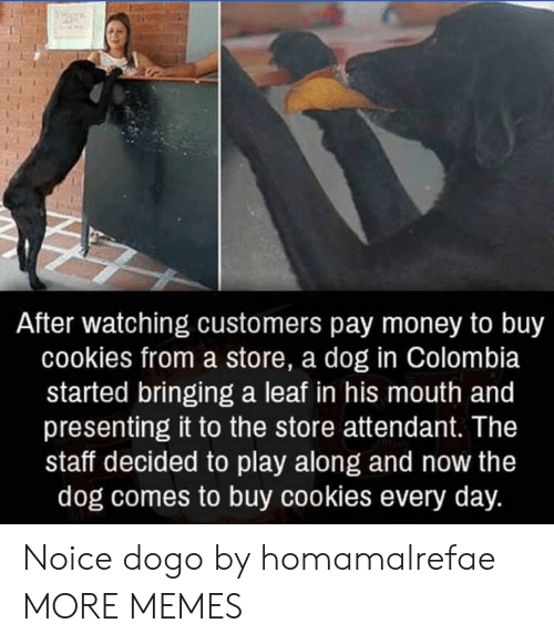 Cookies, Dank, and Memes: After watching customers pay money to buy  cookies from a store, a dog in Colombia  started bringing a leaf in his mouth and  presenting it to the store attendant. The  staff decided to play along and now the  dog comes to buy cookies every day. Noice dogo by homamalrefae MORE MEMES