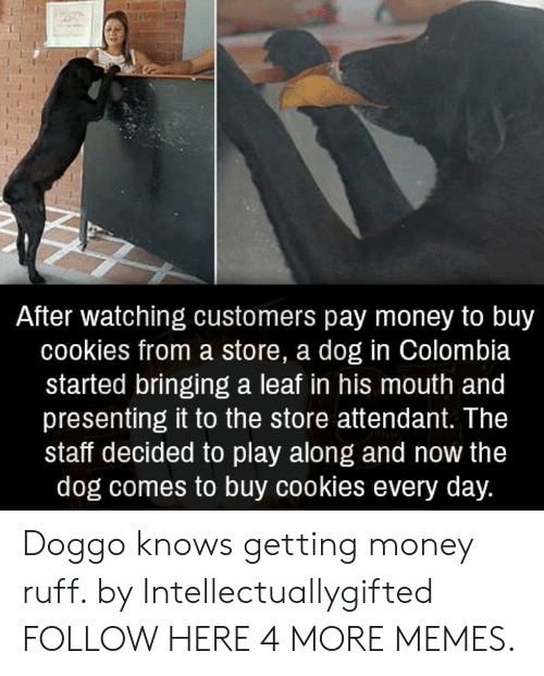 Cookies, Dank, and Memes: After watching customers pay money to buy  cookies from a store, a dog in Colombia  started bringing a leaf in his mouth and  presenting it to the store attendant. The  staff decided to play along and now the  dog comes to buy cookies every day. Doggo knows getting money ruff. by Intellectuallygifted FOLLOW HERE 4 MORE MEMES.