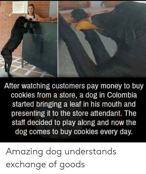 Cookies, Money, and Colombia: After watching customers pay money to buy  cookies from a store, a dog in Colombia  started bringing a leaf in his mouth and  presenting it to the store attendant. The  staff decided to play along and now the  dog comes to buy cookies every day. Amazing dog understands exchange of goods