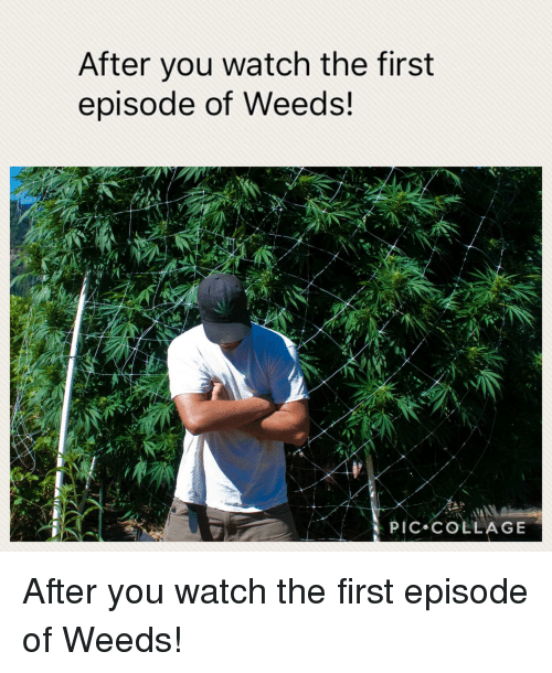 Weed, Collage, and Watch: After you watch the first  episode of Weeds!  PIC COLLAGE