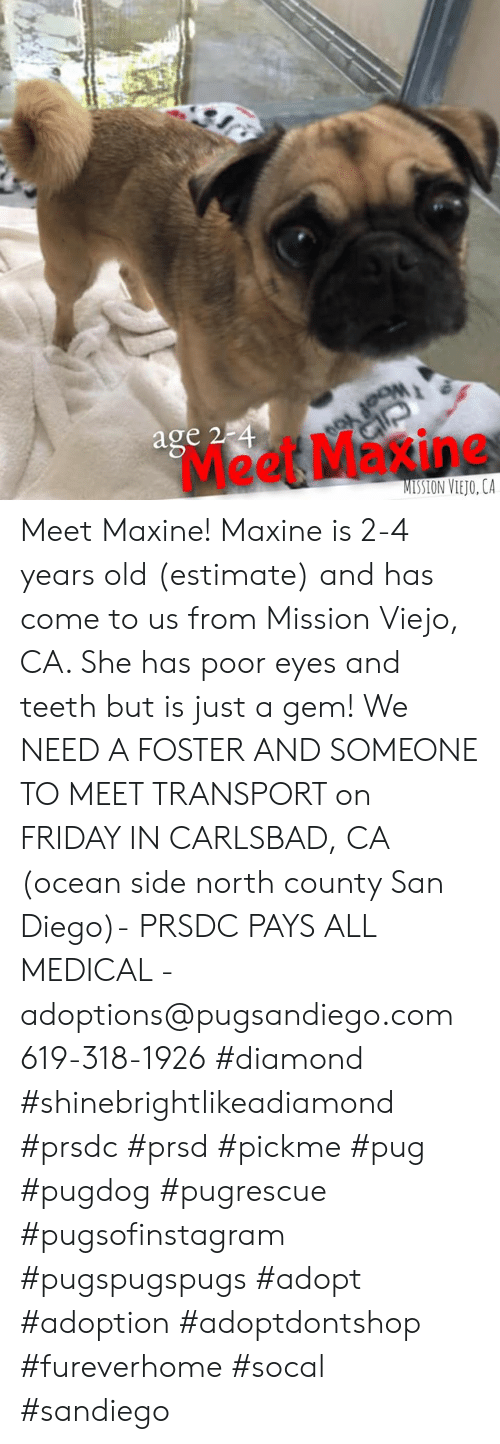 Friday, Memes, and Diamond: age 2  Meet Maxine  MISSION VIETO, LA Meet Maxine! Maxine is 2-4 years old (estimate) and has come to us from Mission Viejo, CA. She has poor eyes and teeth but is just a gem!  We NEED A FOSTER AND SOMEONE TO MEET TRANSPORT on FRIDAY IN CARLSBAD, CA (ocean side north county San Diego)- PRSDC PAYS ALL MEDICAL - adoptions@pugsandiego.com 619-318-1926  #diamond #shinebrightlikeadiamond #prsdc #prsd #pickme #pug #pugdog #pugrescue #pugsofinstagram #pugspugspugs #adopt #adoption #adoptdontshop #fureverhome #socal #sandiego