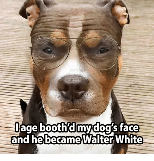 age booth d my dog face he became an 14885929 ✅ 25 best memes about funny dog faces funny dog faces memes,Funny Dog Face Meme