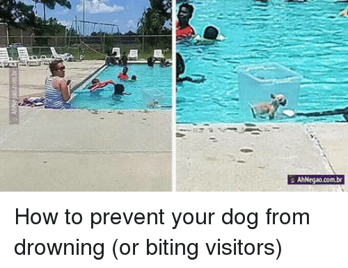 How To, How, and Dog: AhNegao.com.br How to prevent your dog from drowning (or biting visitors)