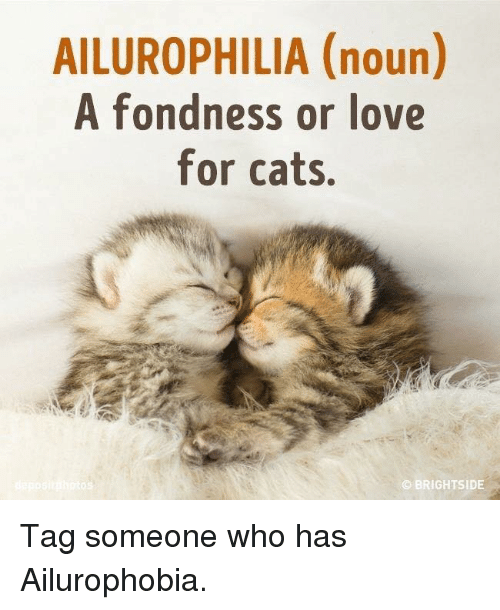 2ded9524e26ce ailurophilia-noun-a-fondness-or-love-for-cats-brightside-tag-10105215.png