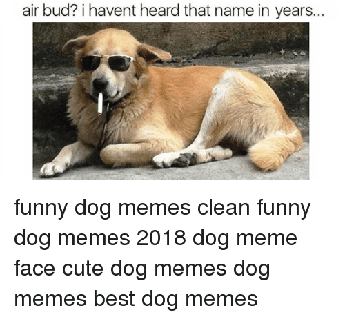 Funny clean dog memes - photo#35