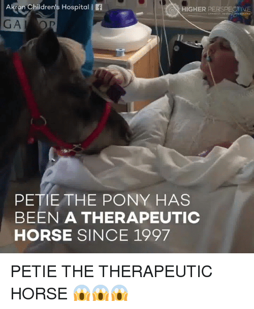 akron childrens hospital l higher perspective pete the pony has 13644497 ✅ 25 best memes about children's hospital children's hospital,Hospital Memes