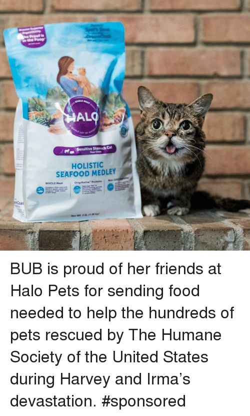 al holistio seafood medley whole meat bub is proud of her friends at