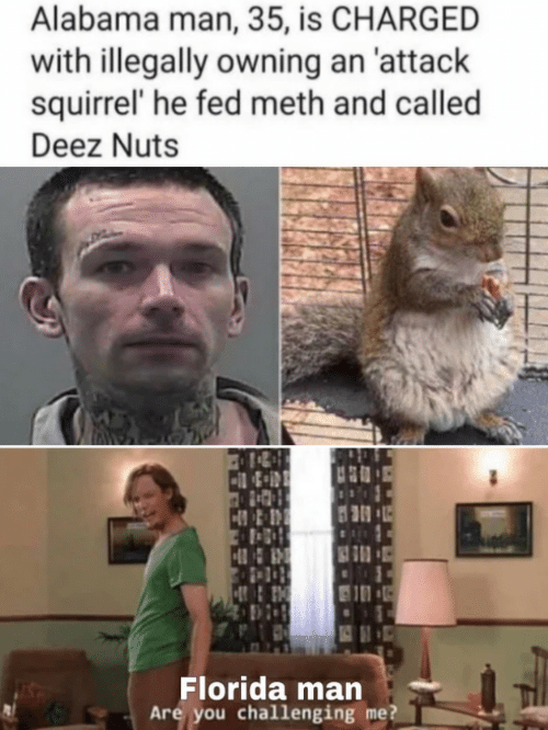Deez Nuts, Florida Man, and Alabama: Alabama man, 35, is CHARGED  with illegally owning an 'attack  squirrel' he fed meth and called  Deez Nuts  Florida man  Are you challenging me?