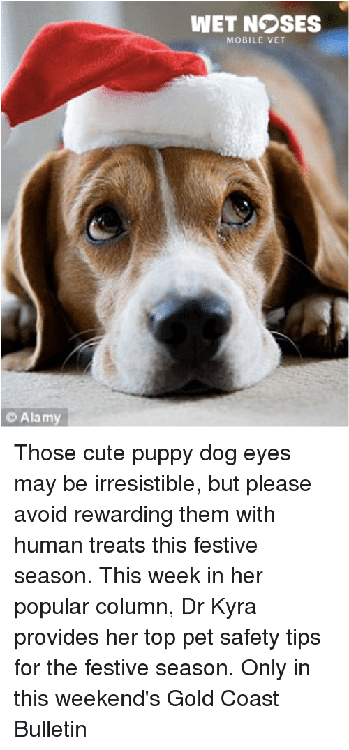 Alamy Wet Nsses Mobile Vet Those Cute Puppy Dog Eyes May Be