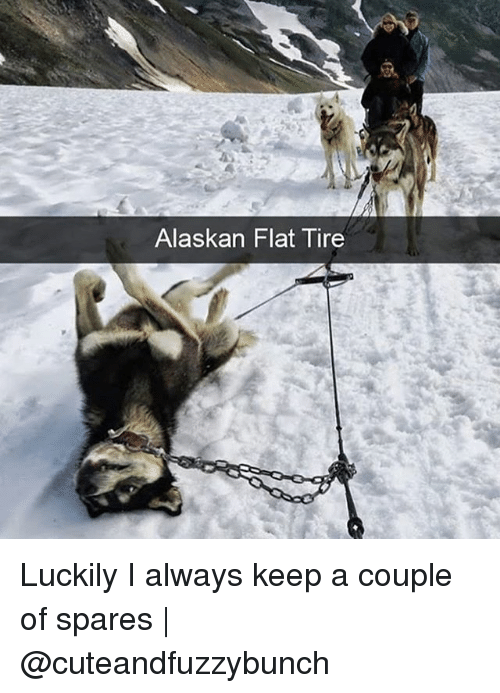 Memes, 🤖, and Couple: Alaskan Flat Tire Luckily I always keep a couple of spares | @cuteandfuzzybunch