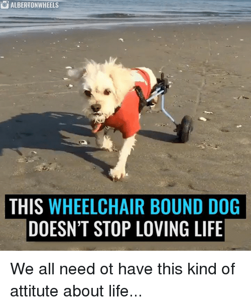 25+ Best Memes About Wheelchair