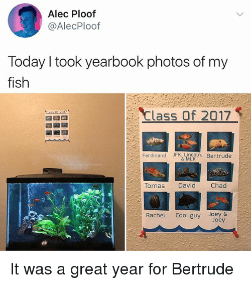 Memes, Cool, and Fish: Alec Ploof  @AlecPloof  Today I took yearbook photos of my  fish  Class Of 2017  Ferdinand JFK, Lincoln. Bertrude  & MLK  Tomas David Chad  Rachel Cool guy Joey &  Joey It was a great year for Bertrude