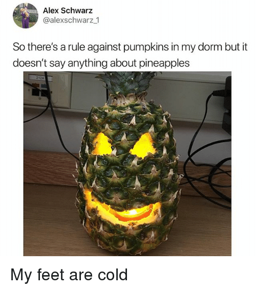 Memes, Cold, and Say Anything...: Alex Schwarz  @alexschwarz 1  So there's a rule against pumpkins in my dorm but it  doesn't say anything about pineapples My feet are cold