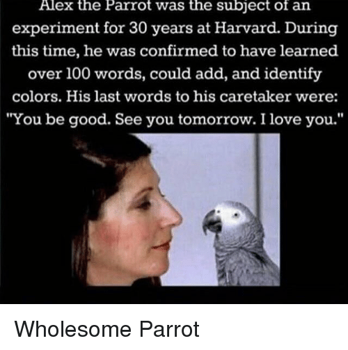 "Anaconda, Love, and I Love You: Alex the Parrot was the subject of an  experiment for 30 years at Harvard. During  this time, he was confirmed to have learned  over 100 words, could add, and identify  colors. His last words to his caretaker were:  ""You be good. See you tomorrow. I love you."" <p>Wholesome Parrot</p>"