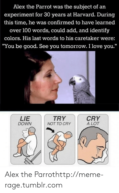 "Love, Meme, and Tumblr: Alex the Parrot was the subject of an  experiment for 30 years at Harvard. During  this time, he was confirmed to have learned  over 100 words, could add, and identify  colors. His last words to his caretaker were:  ""You be good. See you tomorrow. I love you.""  TRY  CRY  A LOT  LIE  DOWN  NOT TO CRY Alex the Parrothttp://meme-rage.tumblr.com"