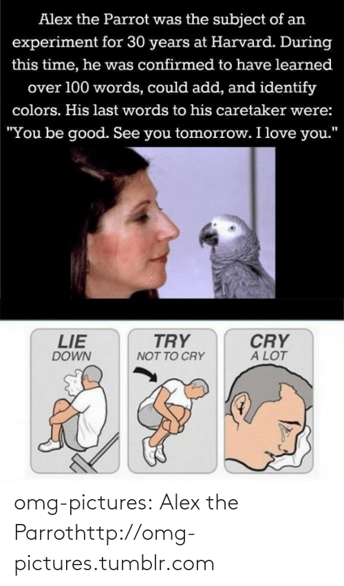 "Love, Omg, and Tumblr: Alex the Parrot was the subject of an  experiment for 30 years at Harvard. During  this time, he was confirmed to have learned  over 100 words, could add, and identify  colors. His last words to his caretaker were:  ""You be good. See you tomorrow. I love you.""  TRY  CRY  A LOT  LIE  DOWN  NOT TO CRY omg-pictures:  Alex the Parrothttp://omg-pictures.tumblr.com"