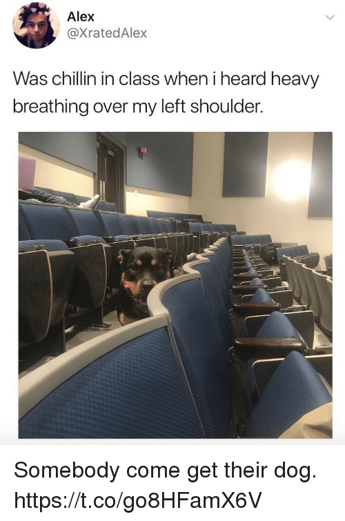 Funny, Dog, and Class: Alex  @XratedAlex  Was chillin in class when i heard heavy  breathing over my left shoulder. Somebody come get their dog. https://t.co/go8HFamX6V