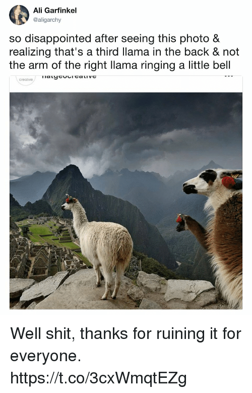 Ali, Disappointed, and Funny: Ali Garfinkel  @aligarchy  so disappointed after seeing this photo &  realizing that's a third llama in the back & not  the arm of the right llama ringing a little bell  creative Well shit, thanks for ruining it for everyone. https://t.co/3cxWmqtEZg