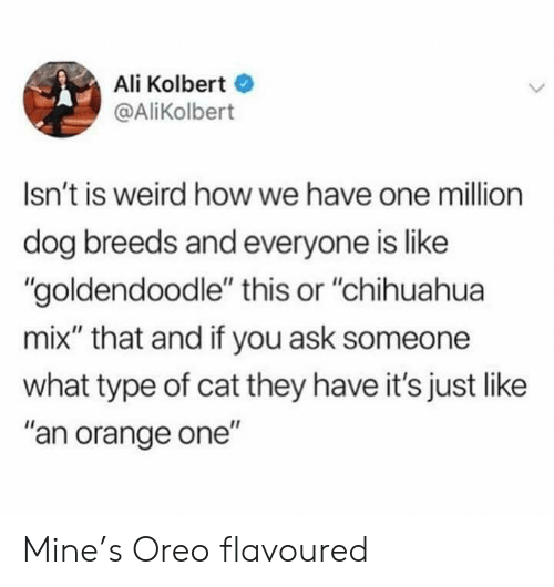 """Ali, Chihuahua, and Weird: Ali Kolbert  @AliKolbert  Isn't is weird how we have one million  dog breeds and everyone is like  """"goldendoodle"""" this or """"chihuahua  mix"""" that and if you ask someone  what type of cat they have it's just like  """"an orange one"""" Mine's Oreo flavoured"""