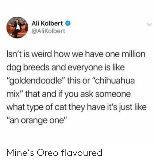 """Ali, Chihuahua, and Weird: Ali Kolbert  @AliKolbert  Isn't is weird howwe have one million  dog breeds and everyone is like  """"goldendoodle"""" this or """"chihuahua  mix"""" that and if you ask someone  what type of cat they have it's just like  """"an orange one"""" Mine's Oreo flavoured"""