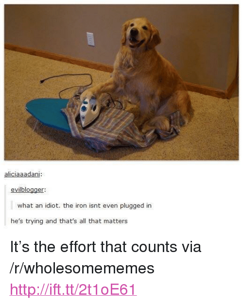 "Http, All That, and Idiot: aliciaaadani  evilblogger  what an idiot. the iron isnt even plugged in  he's trying and that's all that matters <p>It&rsquo;s the effort that counts via /r/wholesomememes <a href=""http://ift.tt/2t1oE61"">http://ift.tt/2t1oE61</a></p>"