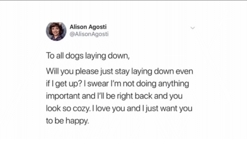 Dogs, Happy, and Back: Alison Agosti  @AlisonAgosti  To all dogs laying down,  Will you please just stay laying down even  if I get up? I swear l'm not doing anything  important and I'll be right back and you  look so cozy.Ilove you and Ijust want you  to be happy.