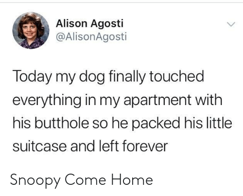 Forever, Home, and Today: Alison Agosti  @AlisonAgosti  Today my dog finally touched  everything in my apartment with  his butthole so he packed his little  suitcase and left forever Snoopy Come Home