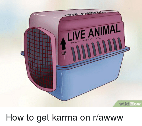 Alive, Animal, and How To: ALIVE ANIMAL  UP  wiki  How How to get karma on r/awww