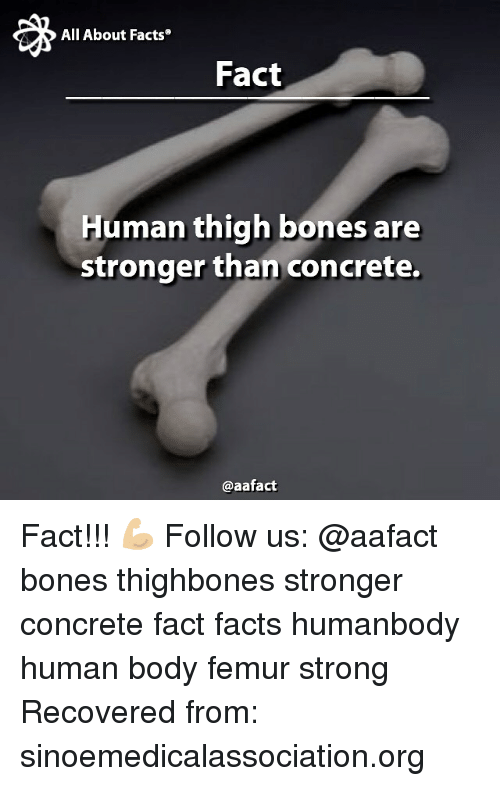All About Facts Fact Human Thigh Bones Are Stronger Than Concrete