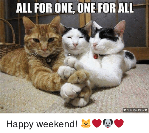 Image result for cats and weekends pictures