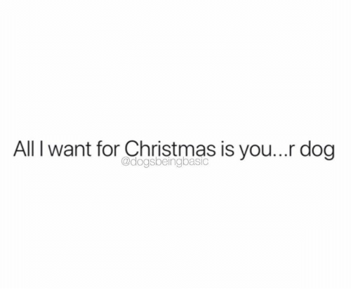 All I Want for Christmas Is You, Christmas, and Dank: All I want for Christmas is you... dog  @dogsbeingbasic