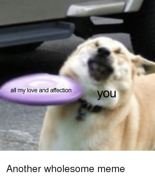 25+ Best Memes About Wholesome