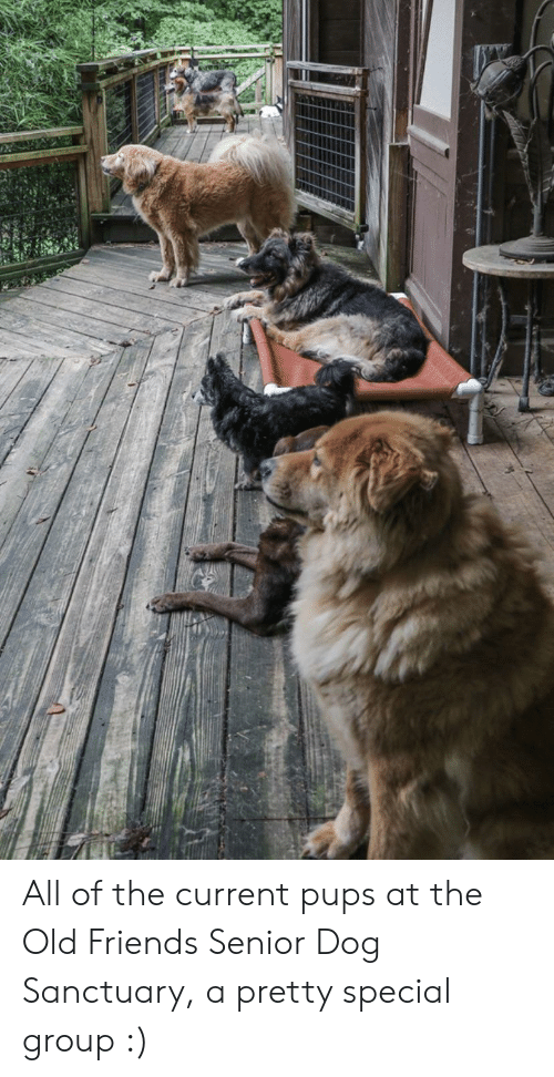 Friends, Old, and All of The: All of the current pups at the Old Friends Senior Dog Sanctuary, a pretty special group :)