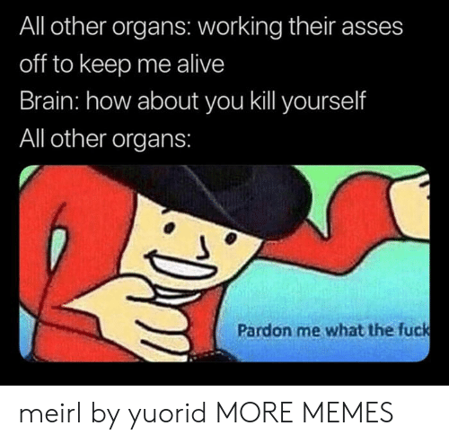 Alive, Dank, and Memes: All other organs: working their asses  off to keep me alive  Brain: how about you kill yourself  All other organs:  Pardon me what the fuck meirl by yuorid MORE MEMES