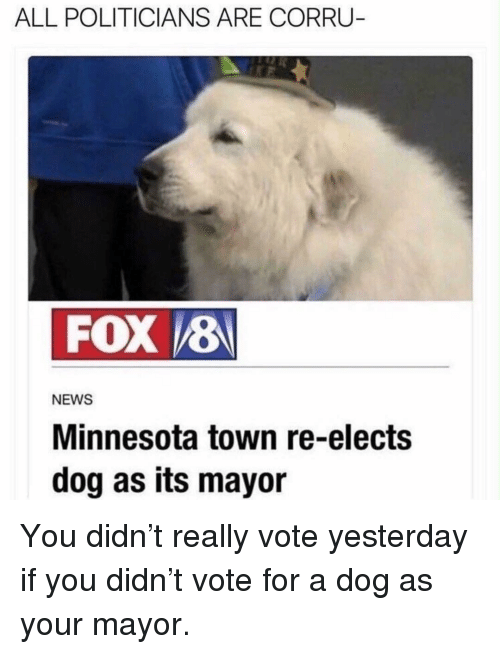Memes, News, and Minnesota: ALL POLITICIANS ARE CORRU  FOX 8  NEWS  Minnesota town re-elects  dog as its mayor You didn't really vote yesterday if you didn't vote for a dog as your mayor.