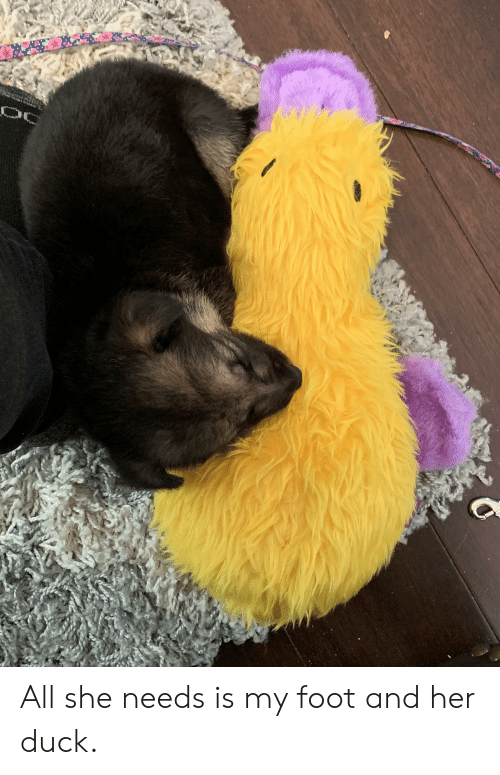 Duck, Her, and Foot: All she needs is my foot and her duck.